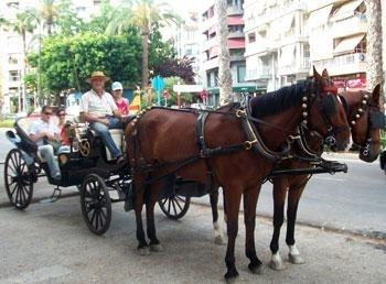 Horses-torry