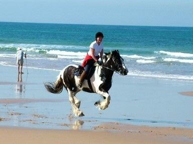 Horse-on-beach