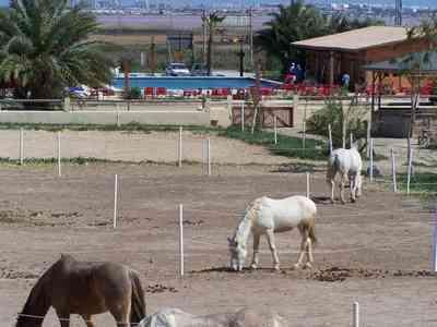 El-rancho-1
