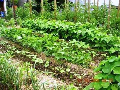 Garden_3.jpg-for-web-large