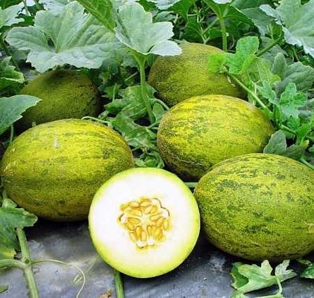 Melon-piel_de_sapo